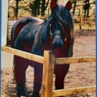 Aelflwyn the pony