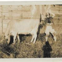Mrs Hilda Martin with cow
