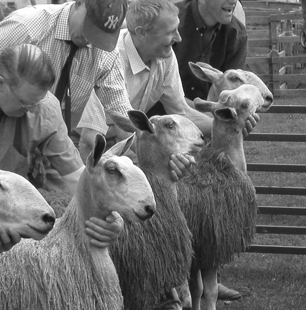 Sheep at Carsphairn Show
