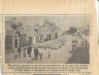 Newspaper clipping – 1910 PC of sheep on Main St Carsphairn