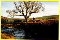 Bridge at the Moor