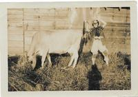 Mrs Hilda Martin with cow, The Crofts